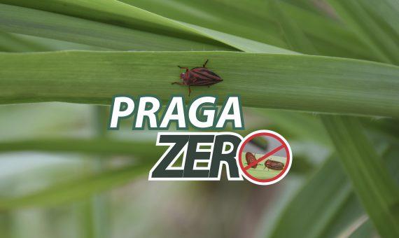 Serviço Praga Zero