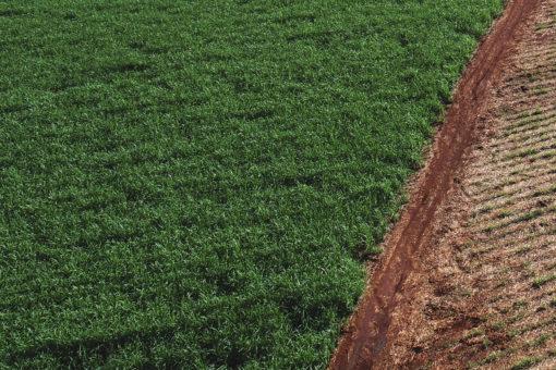 irrigação e micronutrientes da cana de açúcar