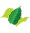 Protocolo Etanol Mais Verde