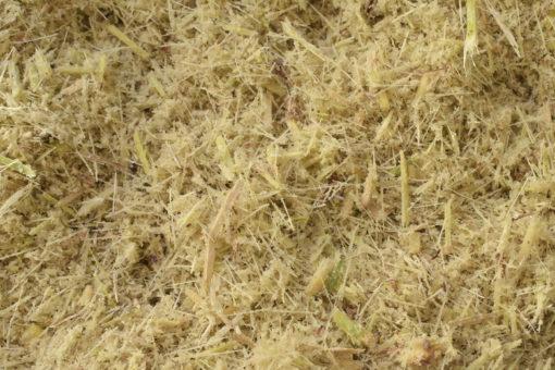 biomassa da cana bagaço