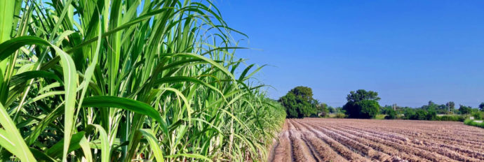 Plantio e colheita de cana de açúcar para o Plano Integrado