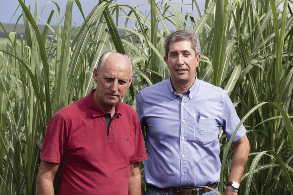 O produtor de Serra Azul, Ataíde Donizete Ferreira de Freitas, ao lado do agrônomo da Canaoeste, Danilo Mazoni. O pequeno produtor não abre mão da cultivar