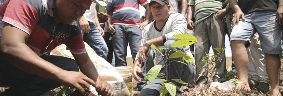 pessoas plantando
