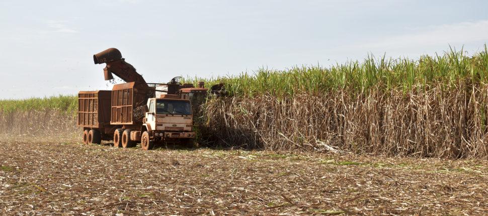 colheita de cana